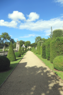 Axis_Topiary